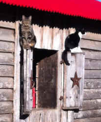 Barn cats on shutter.JPG (516244 bytes)